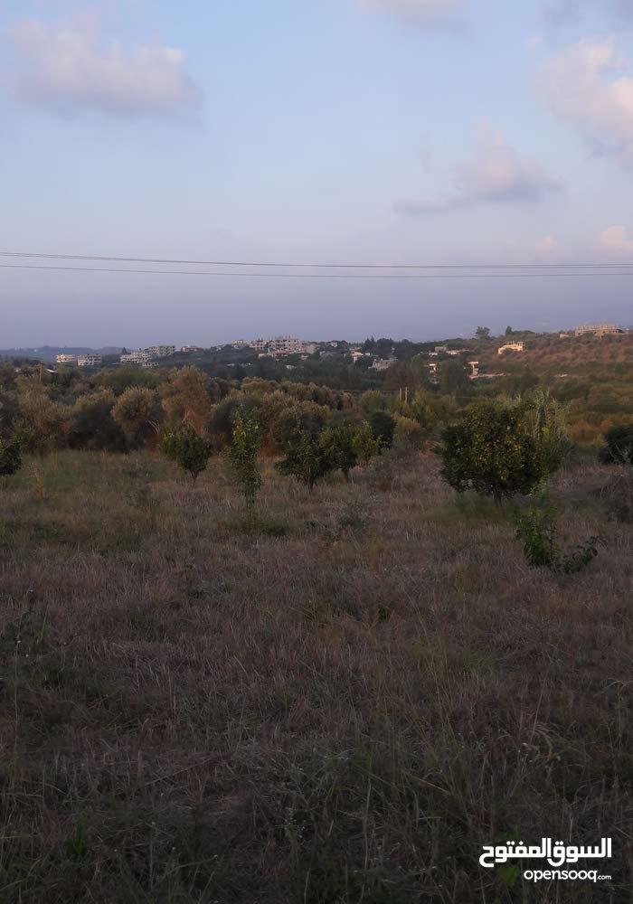 ارض  زراعيةوفي قرية فديو تبعد14 كم عن مدينة اللاذقية