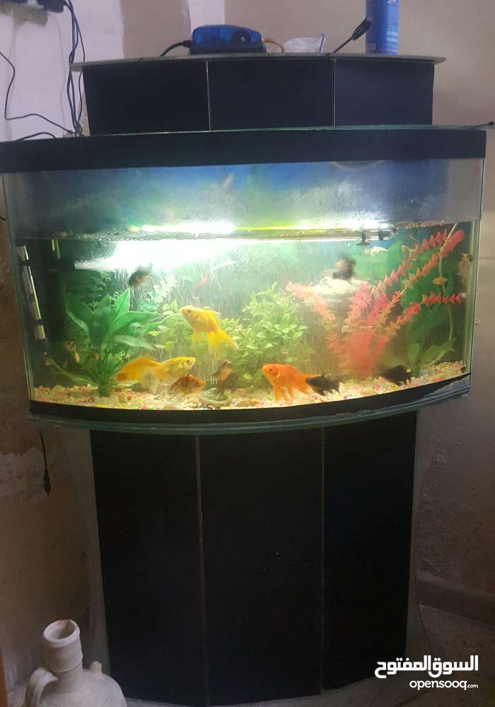 حوض سمك بسعر مغرررري جدا جدا