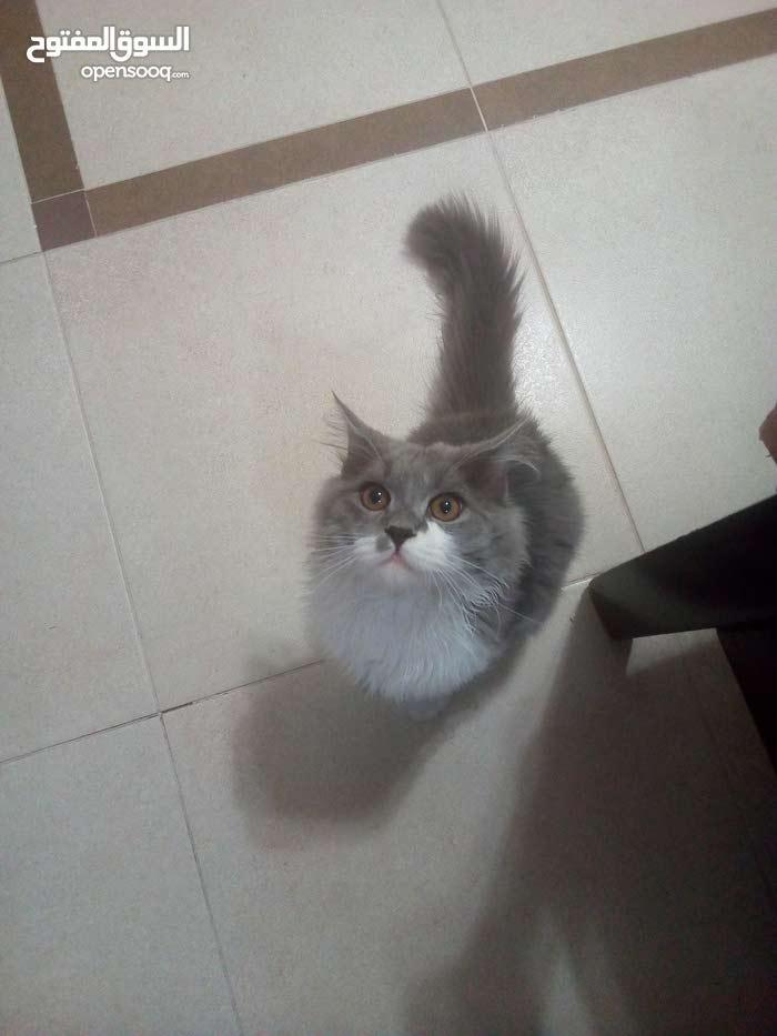 قط مميز
