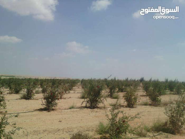 عندى مزرعه للبيع بالنوباريه محافظة البحريه