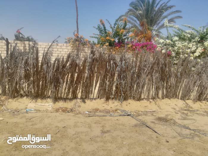 ارض للبيع بوادي نطرون تبعد عن الصحراوي 3كيلو