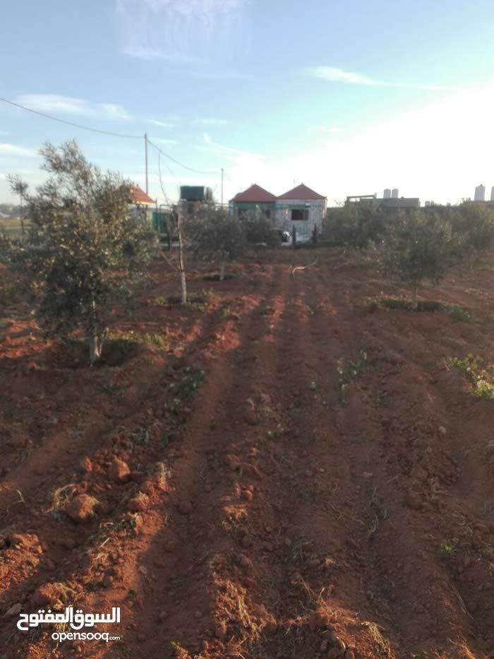 بلعما في أجمل منطقة مزرعة نموذجية مساحة 5 دونمات مع بيت ريفي مسورة ومزروعة بالك