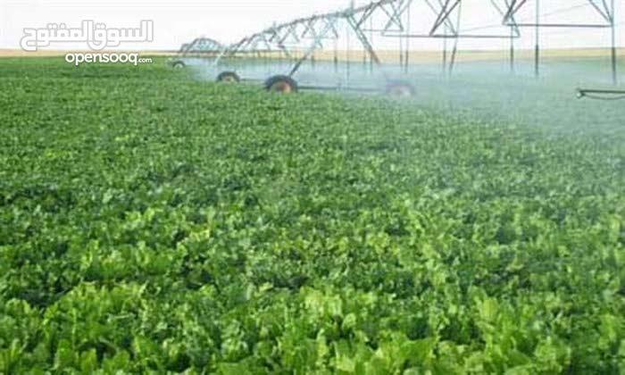 مزارع وادي الريان