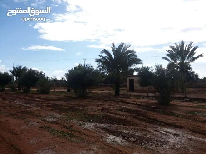 مزرعة 2هكتار الا  ربع في بنغازي