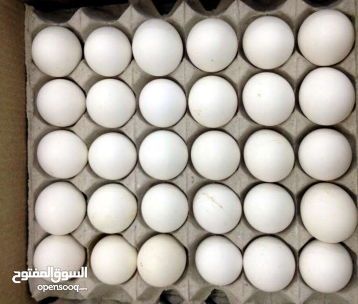 بيض دجاج عماني مخصب 30 بيضه بـ 2.500 ريال