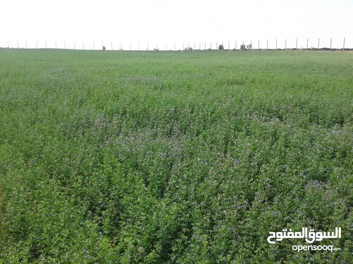 أرض زراعية سقوية للبيع