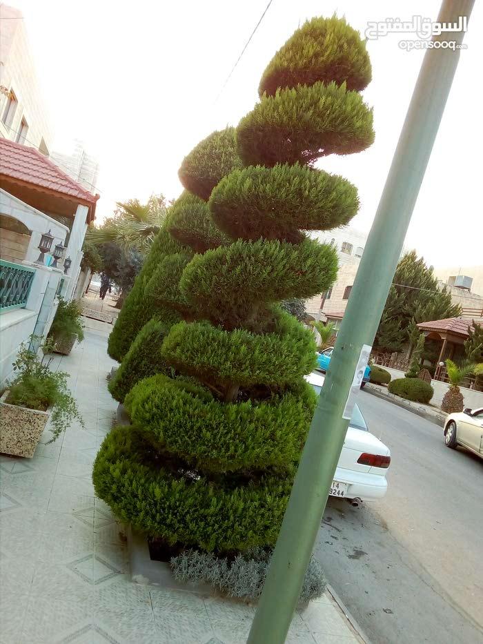ابو عمر للعنايه وتشكيل اشجار الزينه