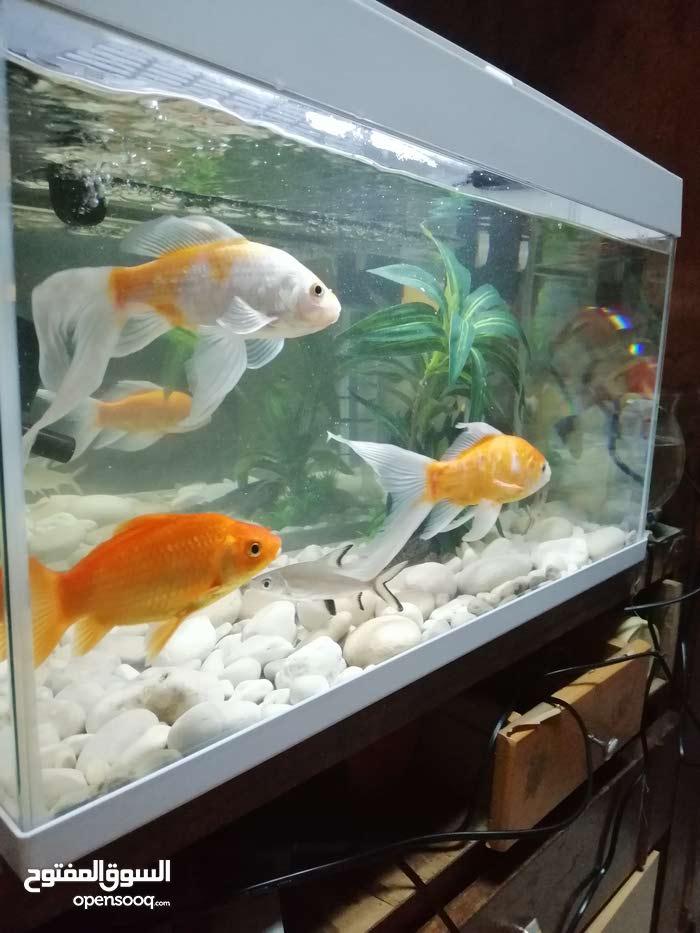 للبيع حوض سمك متوسط الحجم