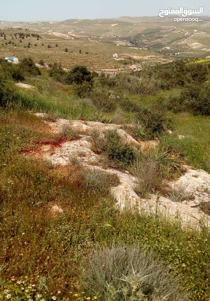 قطعة ارض مميزة في جرش - الاردن