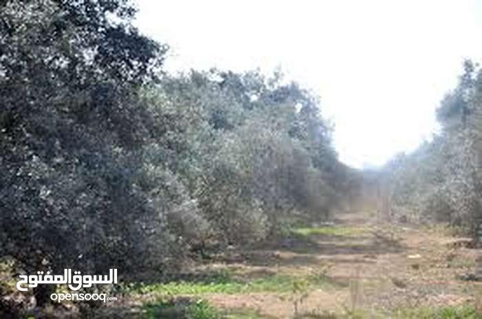 كرم زيتون للبيع في حلب منطقة حريتان بجانب اراضي الملاح