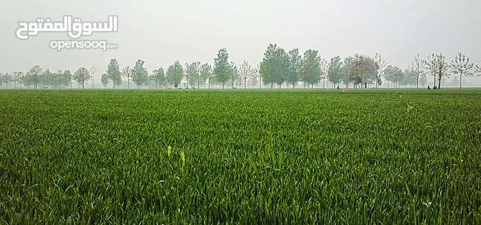 ارض مساحتها 27 فدان مسجله وقابله للتجزئه