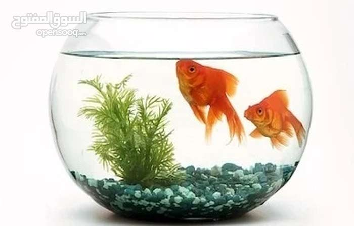 Fish Bowl Aquarium Round Glass Shape