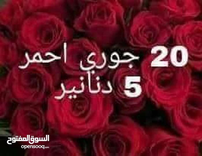 20 جوري احمر 5دنانير