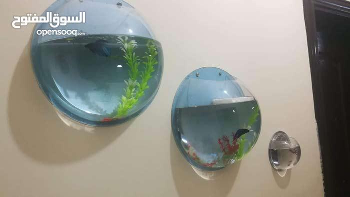 حوض سمك دائرة