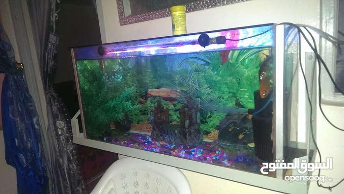 aquarium  avec support