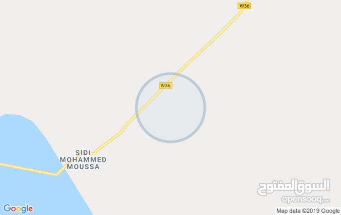 مزرعة نخيل - سيدي محمد