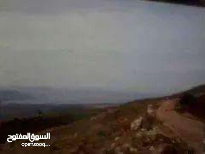 قطع اراضي مميزة ومقسمة عشرات في ام قيس شمال الاردن