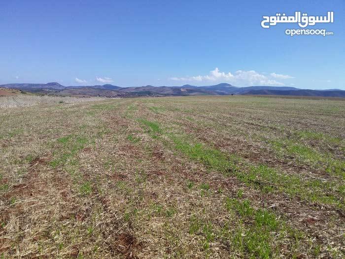أرض فلاحية ممتازة مساحة 6 هكتار بضواحي إقليم الخميسات