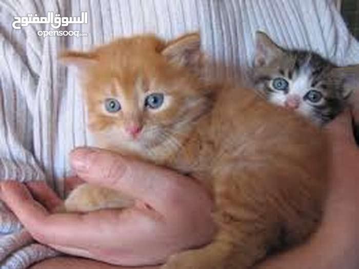 chat bébé jaune