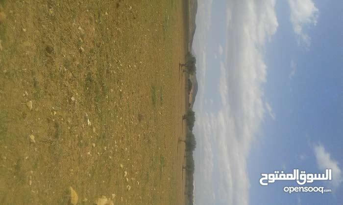 ارض فلاحية مساحتها 8 هك توجد ببوفيشة لندرية بيضاء صالحة للزراعة
