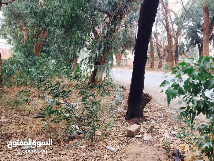 نص هكتارعلى الرئيسي مباشرتآ  القوارشه شارع الشجر عالرئسي واجها 65 متر