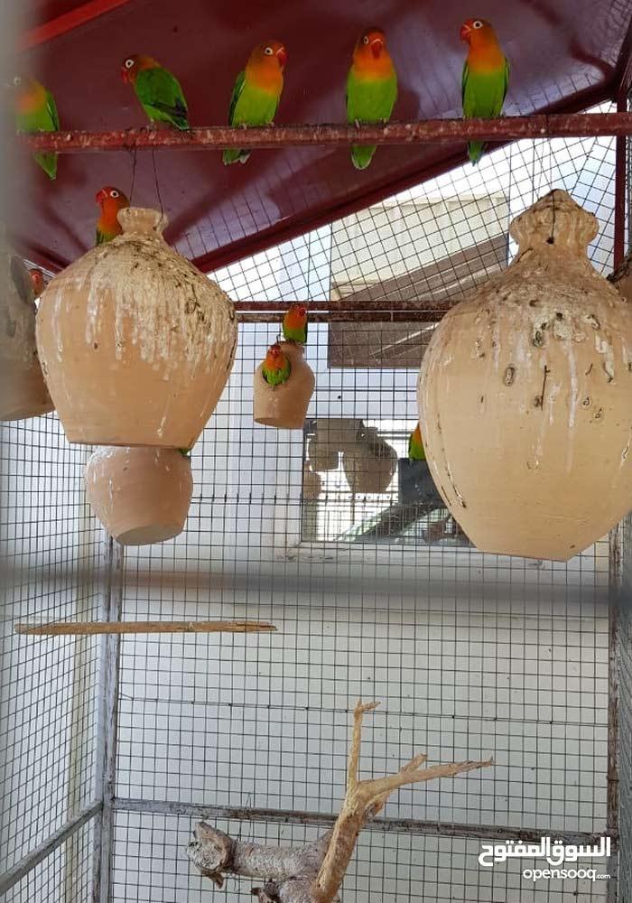 طيور متنوعه مع القفص