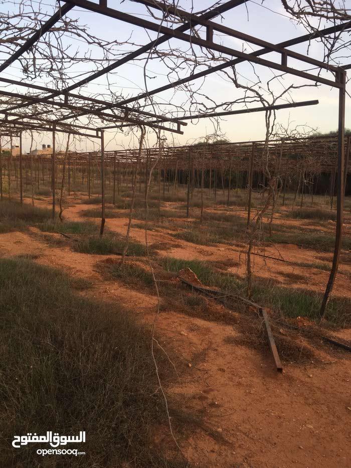 بنغازي مزرعه زقالات للبيع