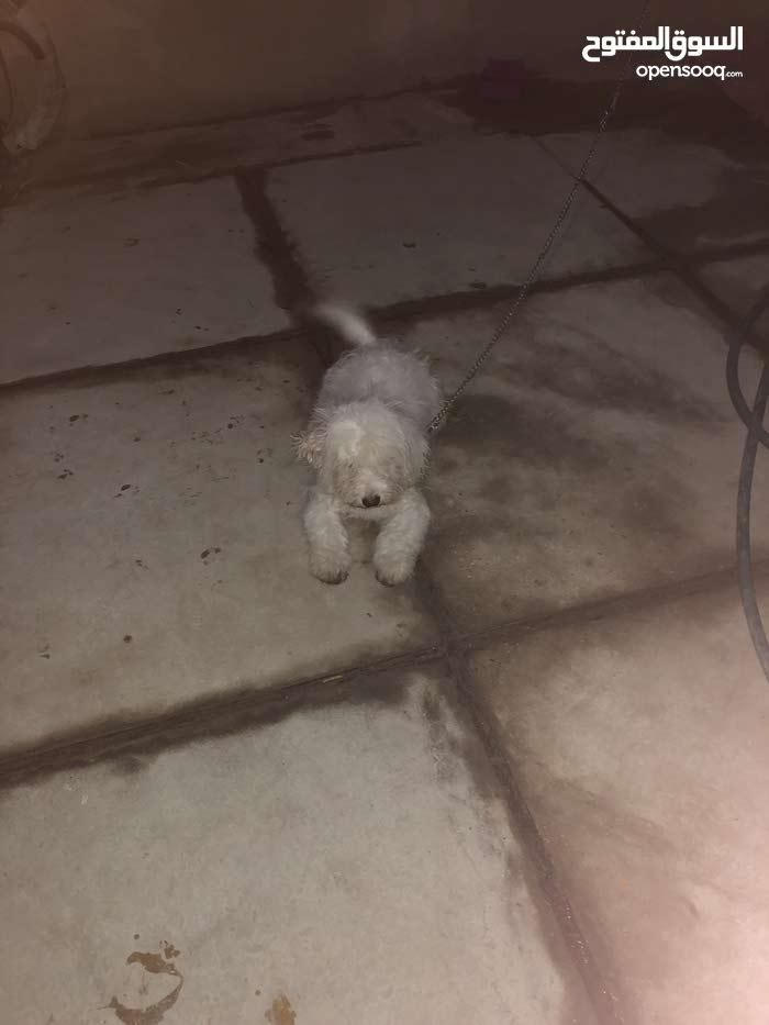 كلب زينه