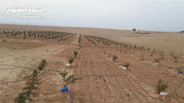 مزرعة مميزة جدا للبيع مساحة 15 دونم/ ام الرصاص