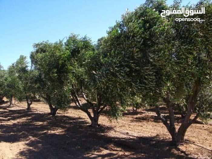 أرض زراعية 12 دونم  - استراد دمشق السويداء