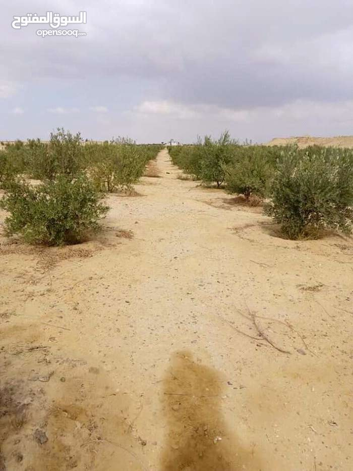 مزرعه للبيع بطريق مصر اسيوط الصحراوي الغربي