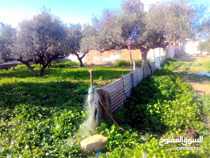 اريانة قلعة الاندلس شارع صادق رهيط طريق المناء