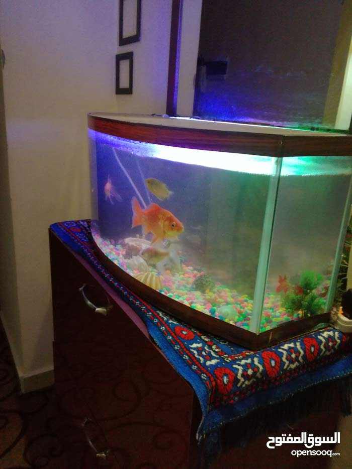 حوض سمك كامل مع جميع اغراضو
