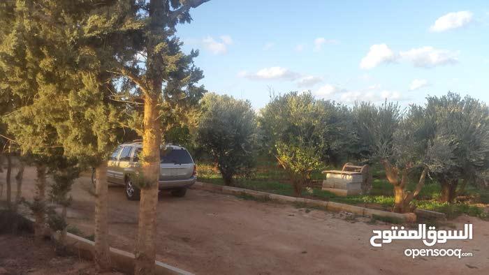 مزرعه 6000 متر طريق بوهادى الضبعى فيها اشجار مثمره زيتون ورمان وعنب