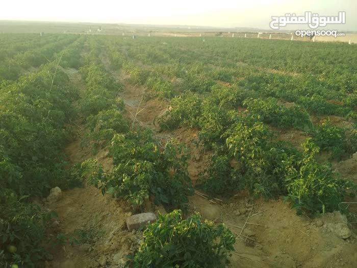 للبيع ارض زراعية بالعياط