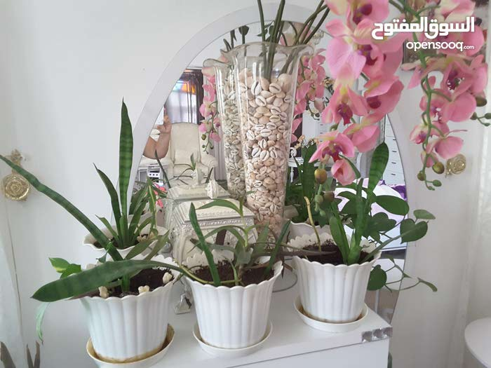 indoor plants and decoration for your lovely home