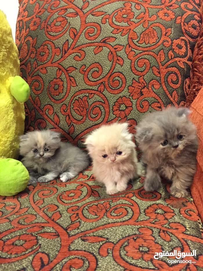 4 Kittens For Sale