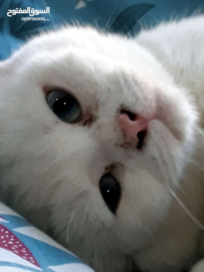 استقبل قطط مؤقت\ اتبنى قطط دائم