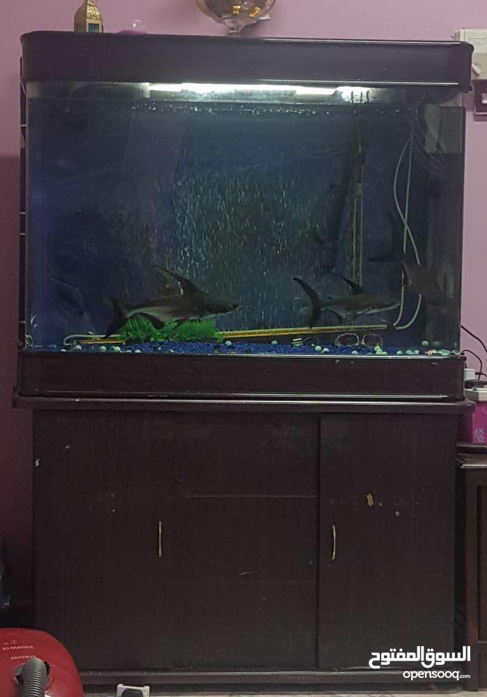 حوض سمك كبير جدا  شامل السمك والفلتر والاكل والزينه