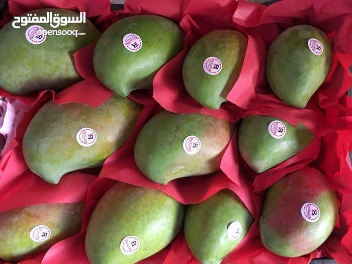 مزارع مانجو في مصر
