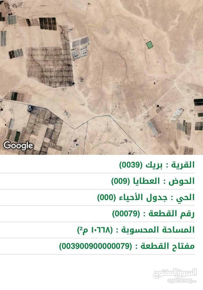 10 دونم في منطقة بريك جنوب عمان