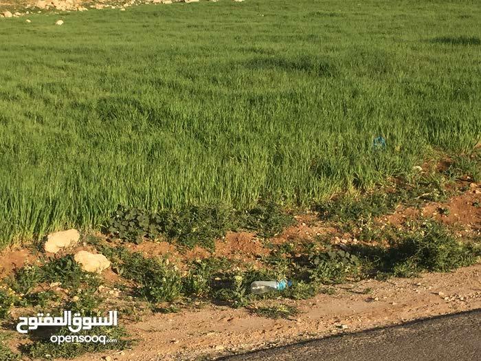 قطعة ارض للبيع في شفا بدران حوض مرج الأجرب
