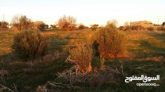 أرض زراعية بالخمس منطقة سيلين