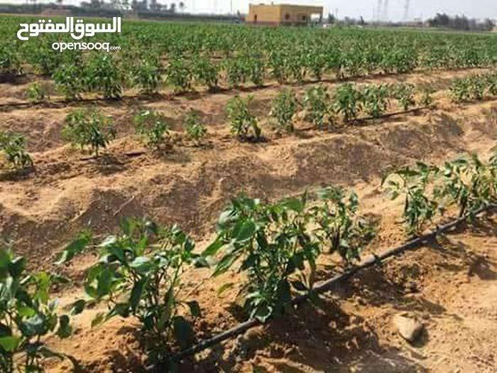 مزارع الامل