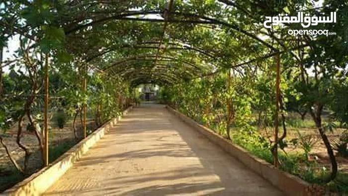 مزرعه ف بوهادي للبيع