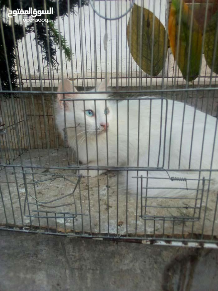 قطه لبيع سعر مغري