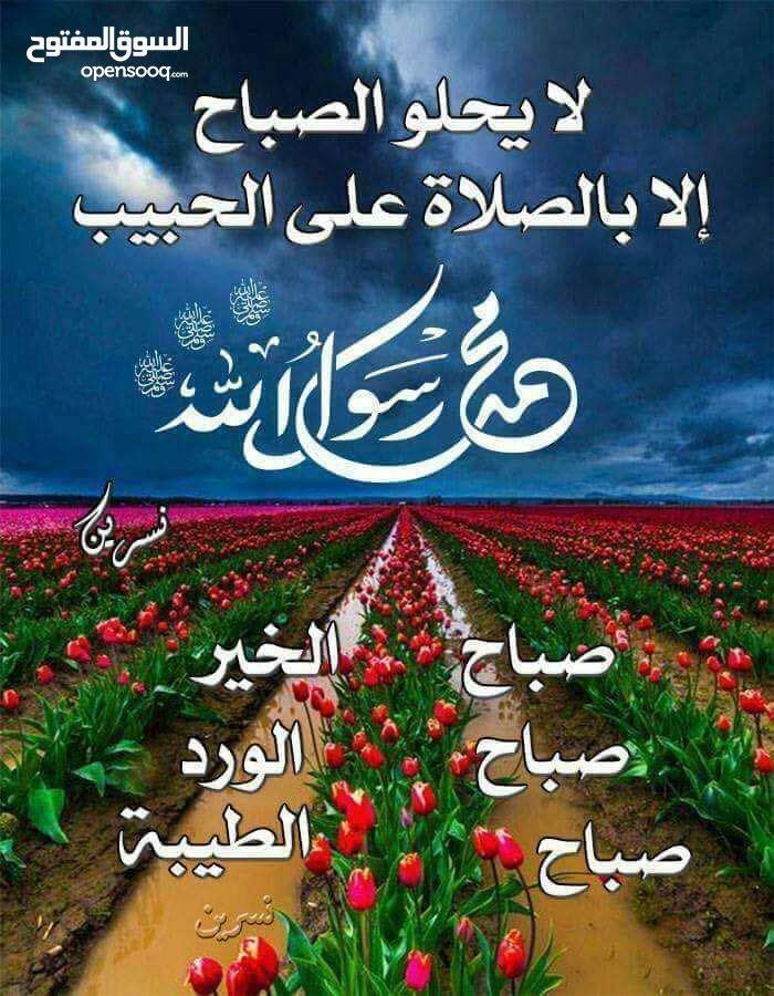 تدريس لغة عربية / تحفيظ قرآن