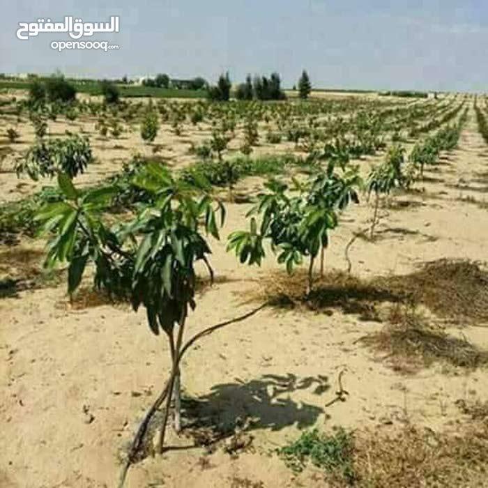 مزرعة 100 فدان للبيع