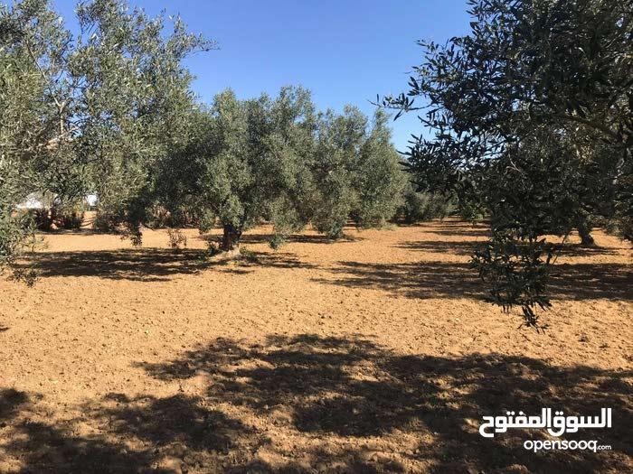 أرض للبيع 2400م² مطلة مباشرة على ملعب الصولجان ببير بورقبة الحمامات