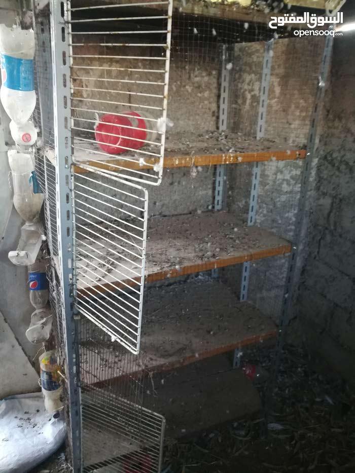 قفص للجاج او الحمام او الطيور الاخرى